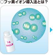 フッ素イオン導入法画像1